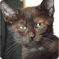Adopt A Pet :: Tabitha - Kensington, MD