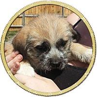 Adopt A Pet :: Tucker - Seattle, WA