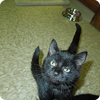 Adopt A Pet :: Sanders - Medina, OH