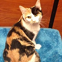 Adopt A Pet :: Clementine - Garner, NC