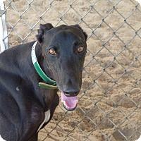 Adopt A Pet :: Porter - Aurora, OH