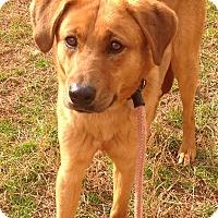 Adopt A Pet :: Rudy - Westport, CT