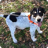 Adopt A Pet :: BANDIT - Glenburn, ME