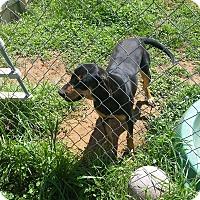 Adopt A Pet :: Sage - Buchanan Dam, TX