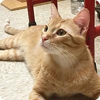 Adopt A Pet :: Lewis - Arlington/Ft Worth, TX