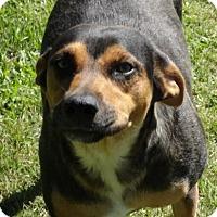 Adopt A Pet :: April meet me 6/2 - Manchester, CT