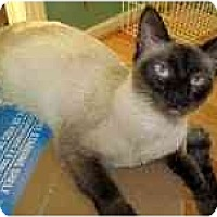 Adopt A Pet :: Shawney - Arlington, VA
