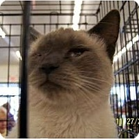 Adopt A Pet :: Kenji - Riverside, RI