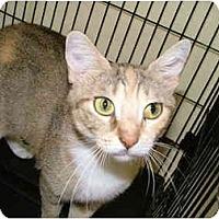 Adopt A Pet :: Leigh - Winter Haven, FL