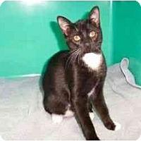 Adopt A Pet :: Isabella - Secaucus, NJ