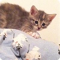 Adopt A Pet :: Baby - Trevose, PA