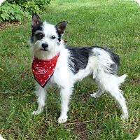 Adopt A Pet :: Addie - Mocksville, NC