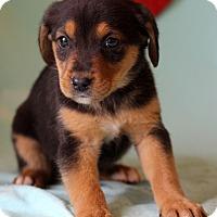 Adopt A Pet :: Keira - Waldorf, MD