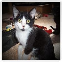 Adopt A Pet :: JENKINS - Medford, WI