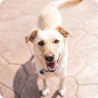 Adopt A Pet :: Fiona - Yorktown, VA