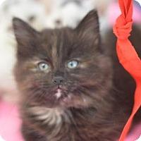 Adopt A Pet :: Taffy - Madison, NJ