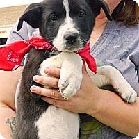 Adopt A Pet :: Rosie pending - Sacramento, CA