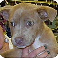 Adopt A Pet :: Woody - Lucerne Valley, CA