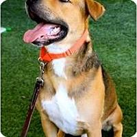 Adopt A Pet :: Apollo - Mission Viejo, CA