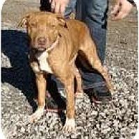 Adopt A Pet :: Ginger 2 (REDUCED) - Staunton, VA