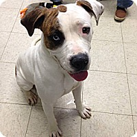 Adopt A Pet :: Gidda - Elderton, PA
