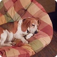 Adopt A Pet :: Mr Pepper - Phoenix, AZ