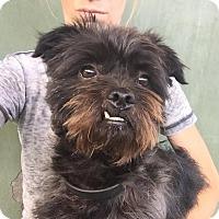 Adopt A Pet :: Mr. Magoo @ shelter - Los Angeles, CA