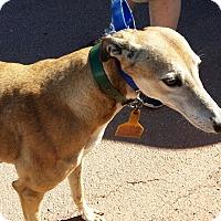 Adopt A Pet :: Jaci Lynn - Oklahoma City, OK