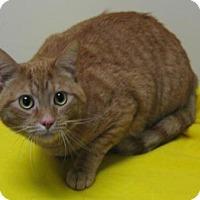 Adopt A Pet :: Mufasa - Gary, IN