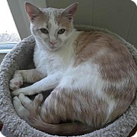 Adopt A Pet :: Thimbles - Johnson City, TN