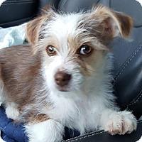 Adopt A Pet :: Cole - Morganville, NJ