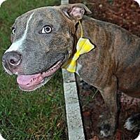 Adopt A Pet :: Spencer - Orlando, FL