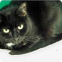 Adopt A Pet :: Cuddles - Secaucus, NJ