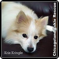 Adopt A Pet :: Kris Kringle - Elmhurst, IL
