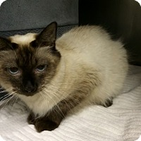 Adopt A Pet :: Saffron - Byron Center, MI