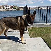 Adopt A Pet :: Kevlar - Victorville, CA