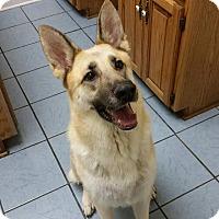 Adopt A Pet :: Greta-Courtesy Post - Alpharetta, GA