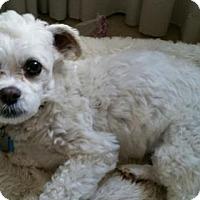 Adopt A Pet :: Izzy - Winfield, PA