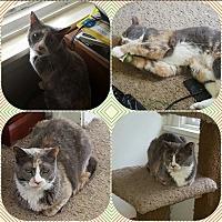 Adopt A Pet :: Emma Mae - Toledo, OH