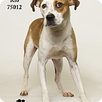 Adopt A Pet :: Rio - Baton Rouge, LA