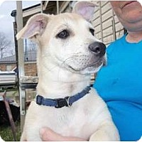 Adopt A Pet :: Runt - courtesy post - Glastonbury, CT