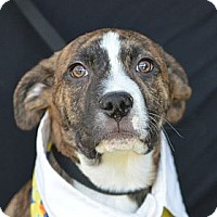 Adopt A Pet :: Randy Travis - Plano, TX