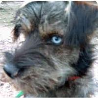 Adopt A Pet :: Santi - Courtesy Post - Scottsdale, AZ