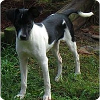 Adopt A Pet :: Spunky - Jacksonville, FL