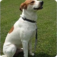 Adopt A Pet :: Paulie - Troy, OH