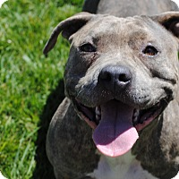 Adopt A Pet :: Tanner - Los Angeles, CA