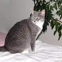 Adopt A Pet :: Catie Gray - Lambertville, NJ