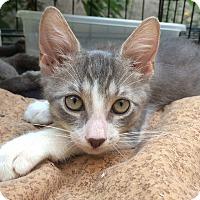 Adopt A Pet :: Kanga - Brooklyn, NY