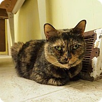 Adopt A Pet :: Spice - Cleveland, OH