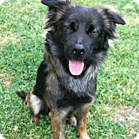 Adopt A Pet :: Jennings - Lufkin, TX